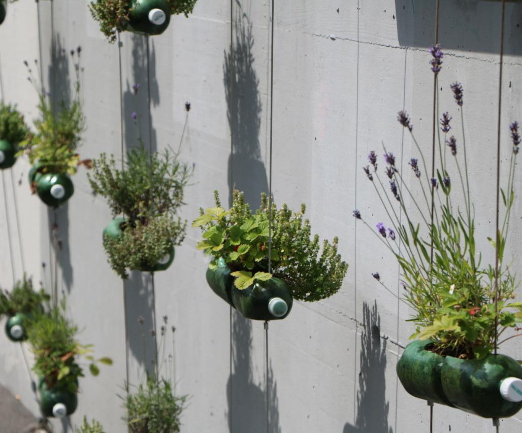 Platz für Urban Gardening ist knapp, aber das macht auch kreativ: Selbstgepflanztes in Petflaschen an der Nordbrücke. Foto: Lunchgate/Simone