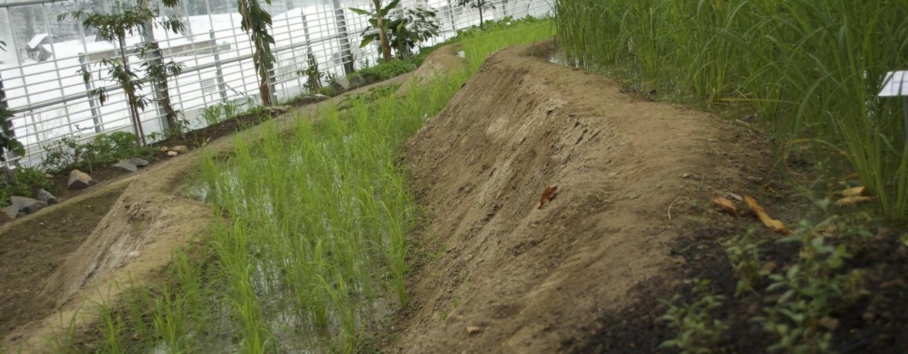 Reis-Terrassen: Seitenansicht