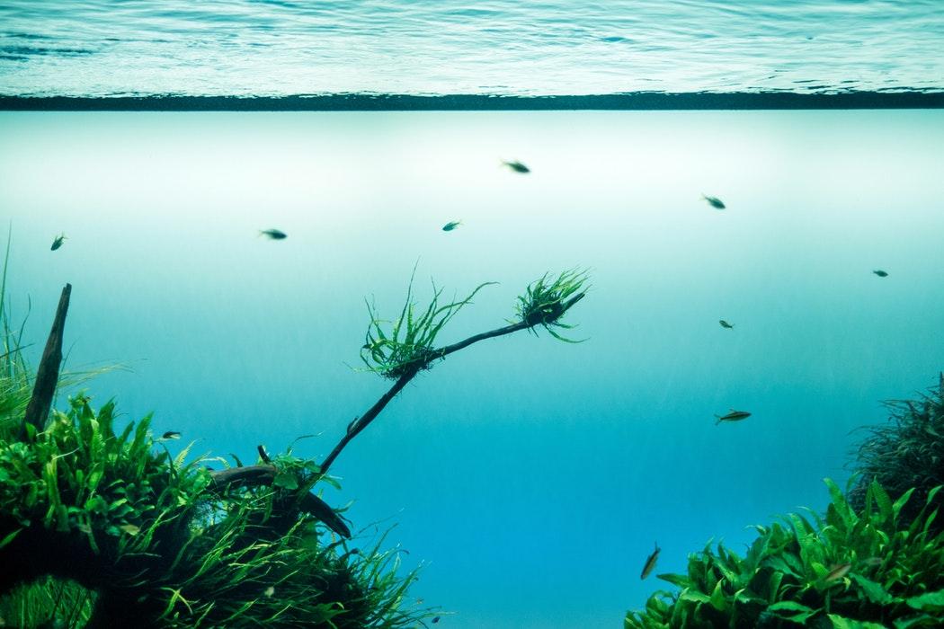 unsplash-algen-pflanze-trend-essen-kochen-unterwasser