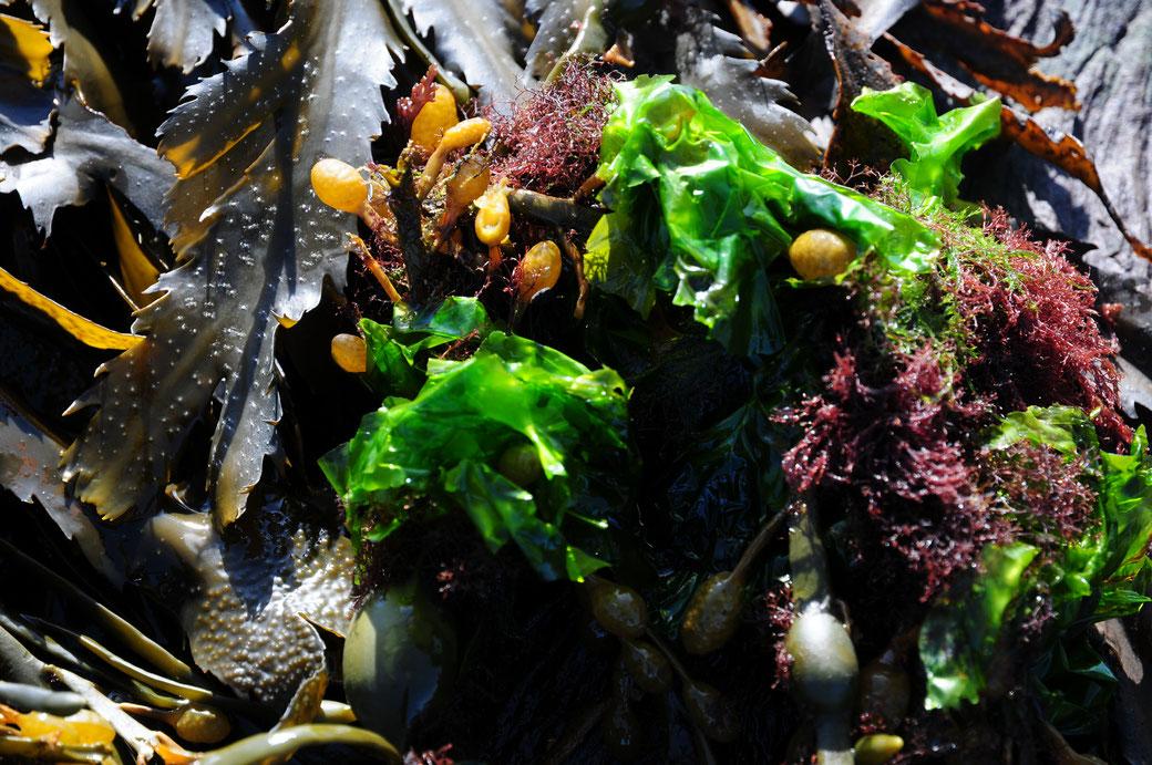 simplyseafood-algen-superfood-trend-essen-kochen-rezepte