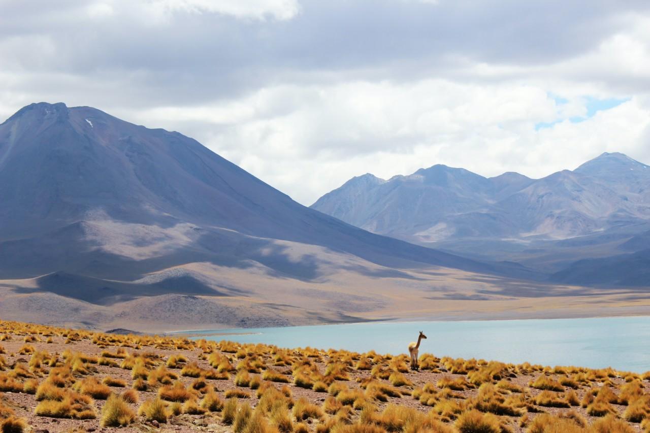 So wie es sein sollte: Das Nationalreservat Los Flamencos, in dem natürliche Ressourcen mit Vorsicht genutzt werden. Foto: unsplash.com